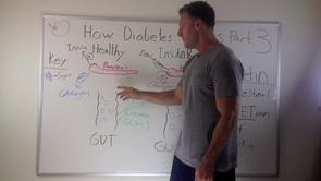 How Diabetes and Berberine Work Part 3 – The Incretin Effect